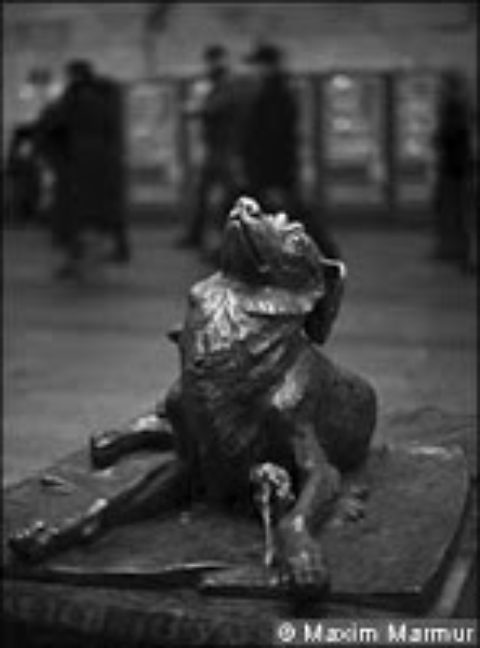 Moscow's strays